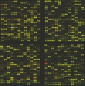 DNA_microarray